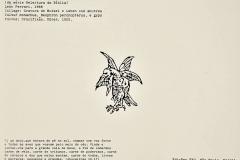 Las aves del cielo, de la serie: Relectura de la Biblia, 1988, collage, grabado de Mutsel y Leben con buitres Vultur monachus, Neophron percnopterus, e gyps fulvus, Crucifixión, Durero, 1502